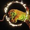 Цирки в Заволжье