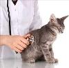 Ветеринарные клиники в Заволжье
